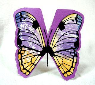 Bigbutterfly