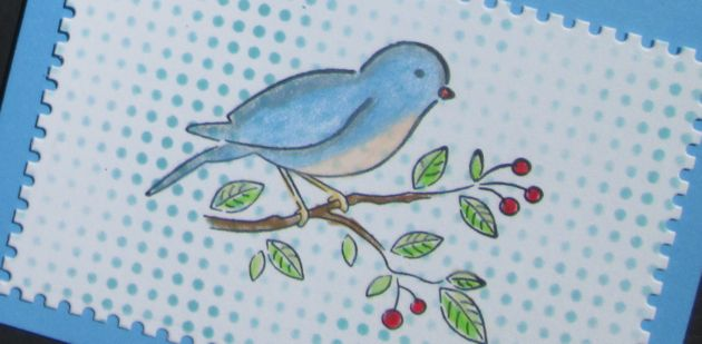Petey Bird