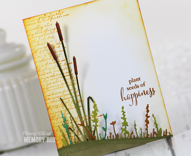 Cattail-Happiness-2