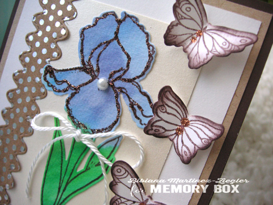 Iris in blue detail