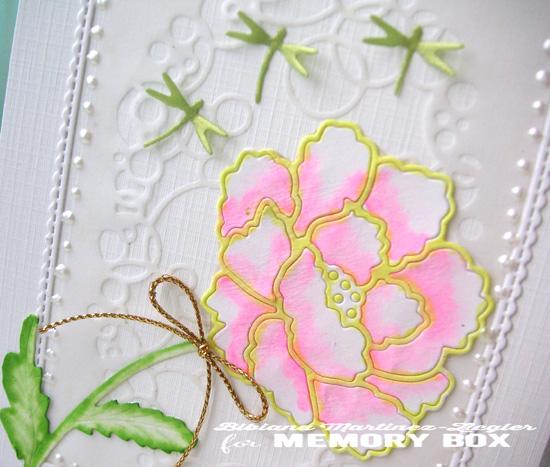 Rose in white detail