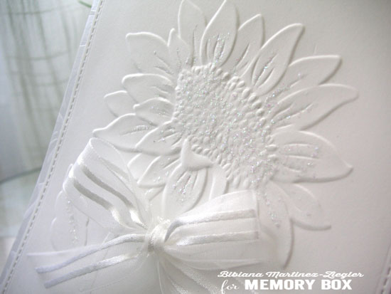 White sunflower EF detail