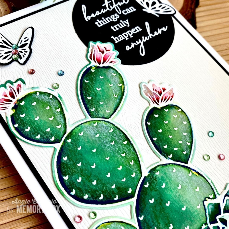 Cactus WM 4
